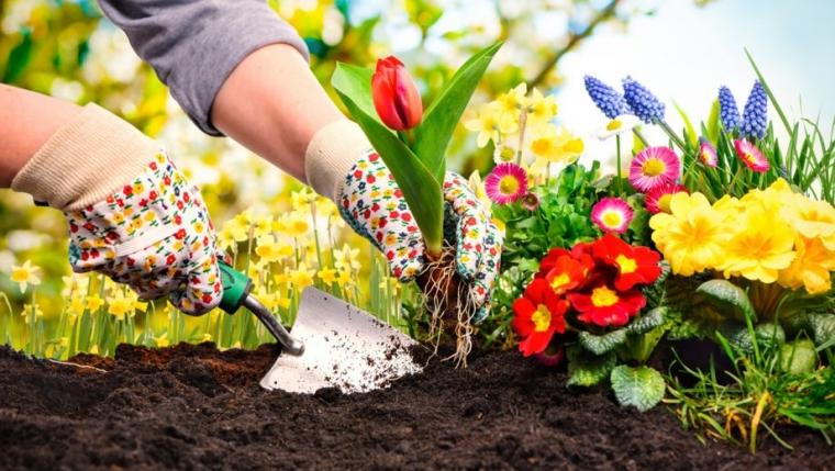 3 tips voor een bloeiende tuin